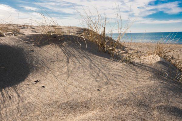 Maglehøj Strand