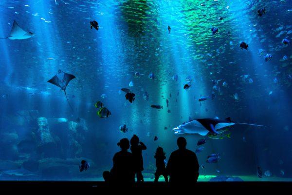 Den Blå Planet, Danmarks Akvarium