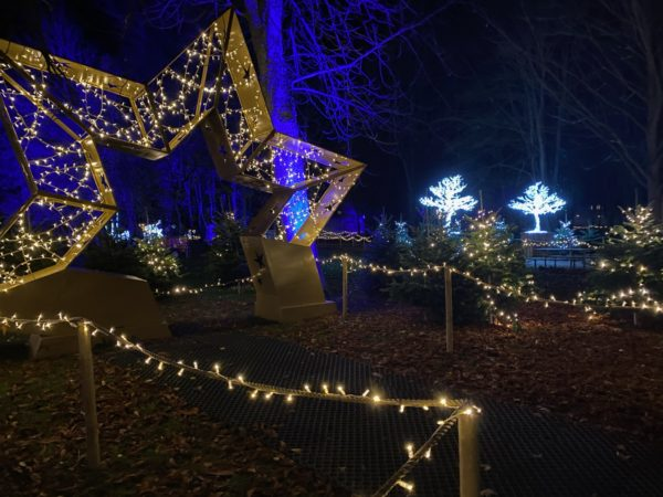 Lumagica i Odense - Enchanted Winter Forest