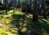 Tag på tur i skoven
