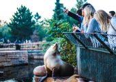 Kom tæt på dyrene i en af Danmarks dyreparker